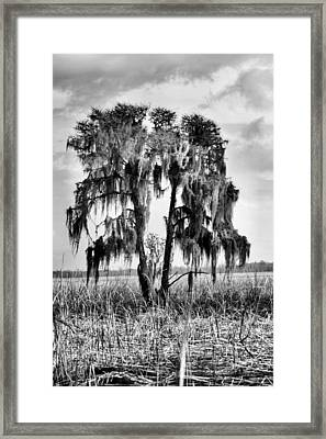 Southern In Black And White Framed Print by JC Findley
