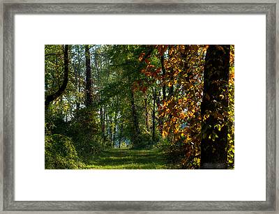 Southern Indiana Fall Colors Framed Print by Melissa Wyatt