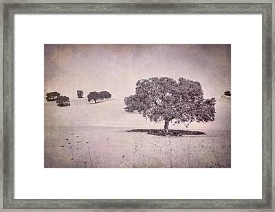 Southern Oaks Framed Print