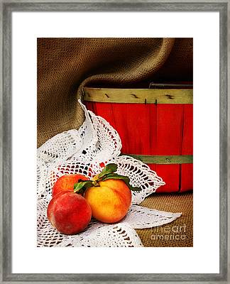Southern Peaches Framed Print by Cheryl Davis
