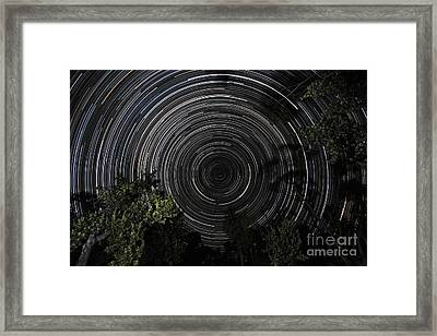 Southern Sky Star Trails Over Banksia Framed Print by Philip Hart