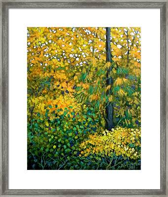 Southern Woods Framed Print by Jeanette Jarmon