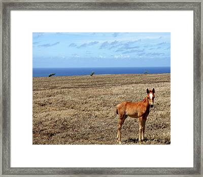 Southernmost Pony Framed Print by James Mancini Heath