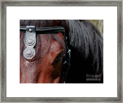Spanish Horse Framed Print by Christean Ramage