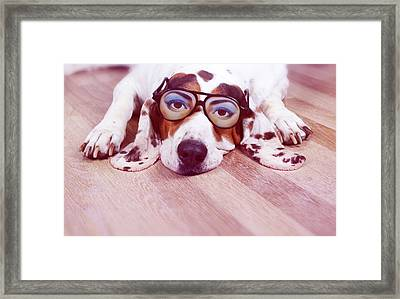 Spanish Hound Dog Lying With Joke Glasses Framed Print by Retales Botijero