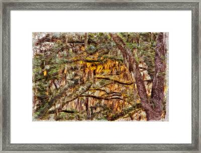 Spanish Moss And Sunset Framed Print