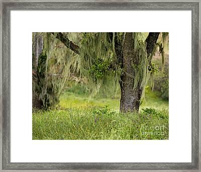 Spanish Moss And Wildflowers Framed Print by Matt Tilghman