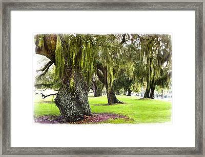 Spanish Moss At Jekyll Island Framed Print by Debra and Dave Vanderlaan