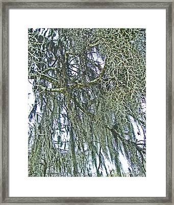 Framed Print featuring the photograph Spanish Moss by Lizi Beard-Ward