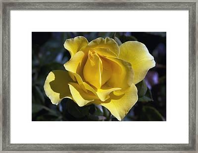 Sparkle N Shine Framed Print by Linda Dunn