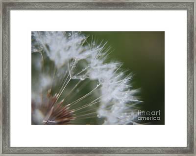Sparkle Seeds Framed Print by Yumi Johnson