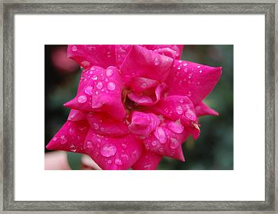 Sparkled Rose 2 Framed Print by Beverly Hammond