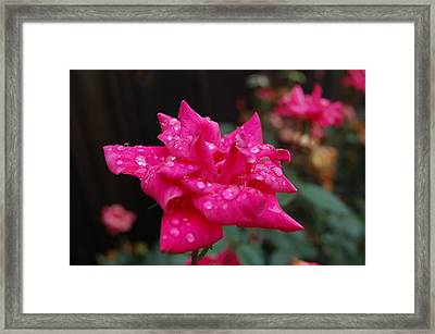 Sparkled Rose Framed Print by Beverly Hammond
