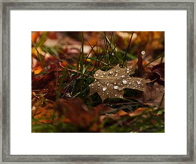 Sparkling Gems Framed Print by Cheryl Baxter