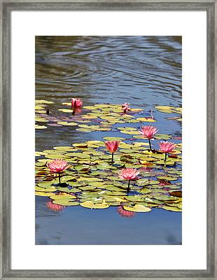 Sparkling Like Jewels Framed Print by Sandy Fisher