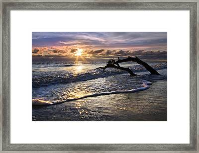 Sparkly Water At Driftwood Beach Framed Print by Debra and Dave Vanderlaan