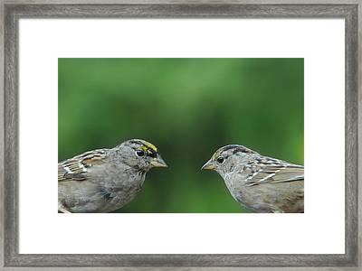 Sparrow Love Framed Print by Donna Blackhall