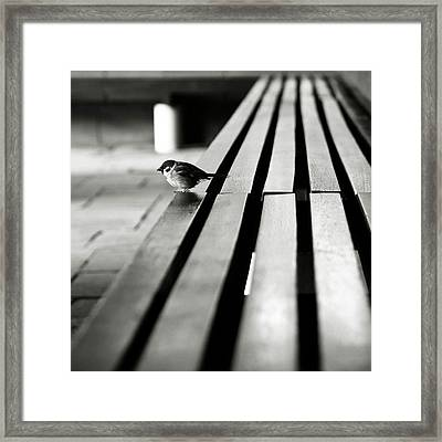 Sparrow On Bench Framed Print