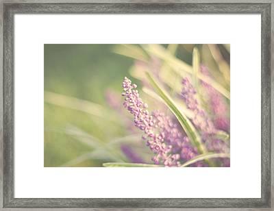 Speak Softly Framed Print by Amy Tyler
