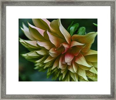 Special Dahlia Framed Print by Tamera James