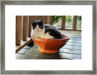Framed Print featuring the photograph Speck by Rdr Creative
