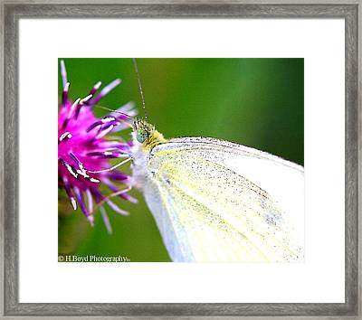 Speckled Wings Framed Print by Heather  Boyd