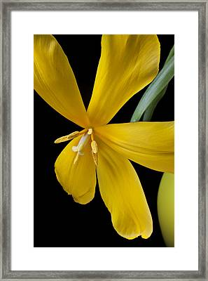 Spent Tulip Framed Print by Garry Gay