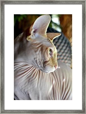 Sphynx In Profile Framed Print by Fraida Gutovich
