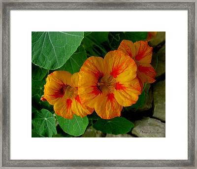 Spicy Floral Framed Print by Debra     Vatalaro