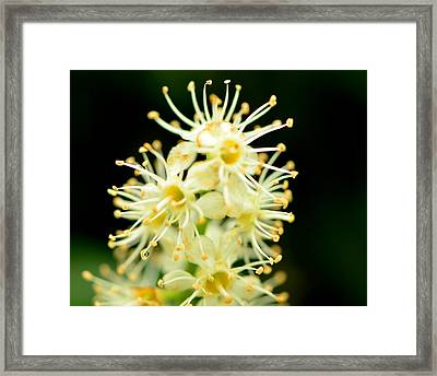 Framed Print featuring the photograph Spider Flower by Tanya Tanski