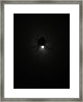 Spider In The Moonlight Framed Print by Kym Backland