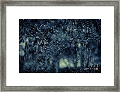 Framed Print featuring the photograph Spider Web by Matt Malloy