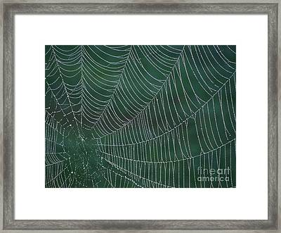 Spider Web With Dew Drops Framed Print