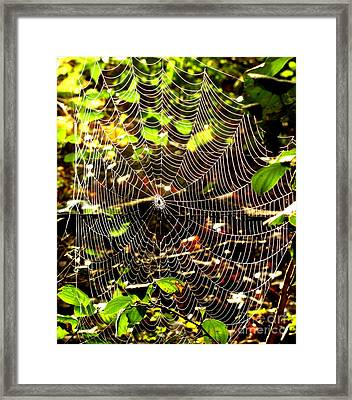 Spider Work Of Art Framed Print by Marilyn Smith