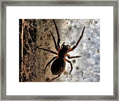 Spiders Home Framed Print