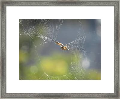 Framed Print featuring the photograph Spider's Pantry by Bonnie Muir