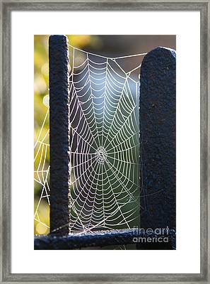 Spider's Web Framed Print by Jo