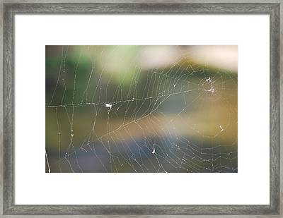 Spiderweb Framed Print by Michele Carter