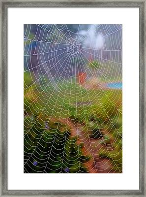 Spiderweb With Dew Drops Framed Print