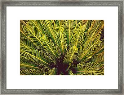 Spiked Leaves Framed Print by Sumit Mehndiratta