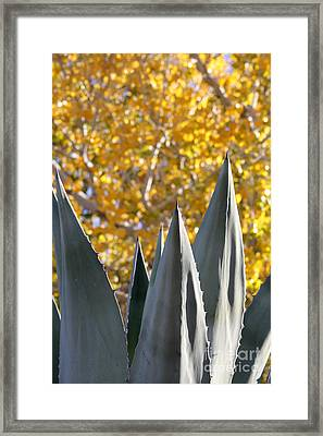 Spikes And Leaves Framed Print