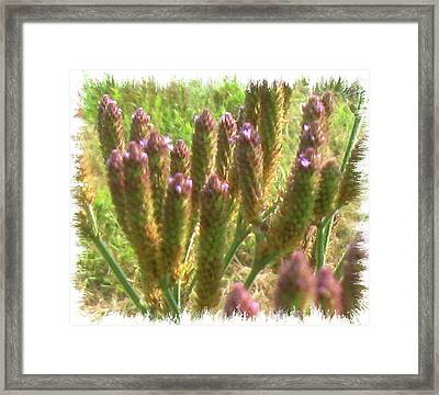 Spikes Framed Print by Juliana  Blessington