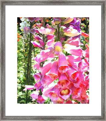 Spikes Of Pink Foxgloves Framed Print by Elaine Plesser
