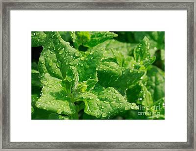Spinach Leaves Framed Print