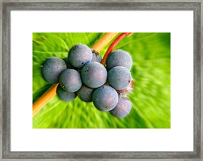 Spinning Pinot Framed Print by Jean Noren