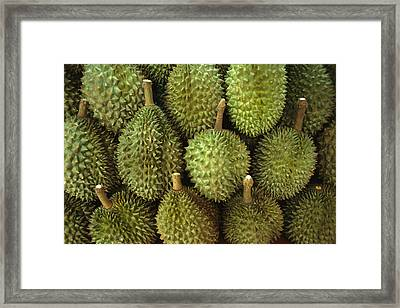 Spiny Green Durian Fruit Sold Framed Print by Todd Gipstein