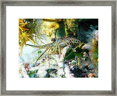 Spiny Framed Print by Li Newton
