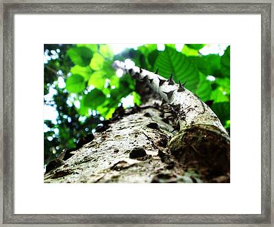 Spiny Tree Framed Print by Rosvin Des Bouillons