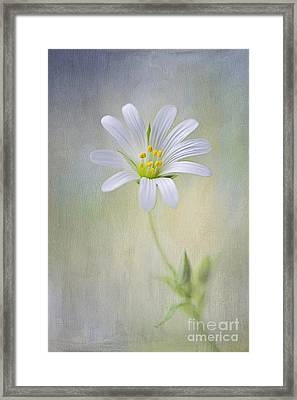 Spirit Of Spring Framed Print by Jacky Parker