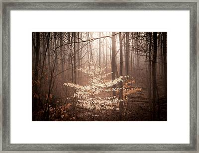 Spirit Of The Forest Framed Print
